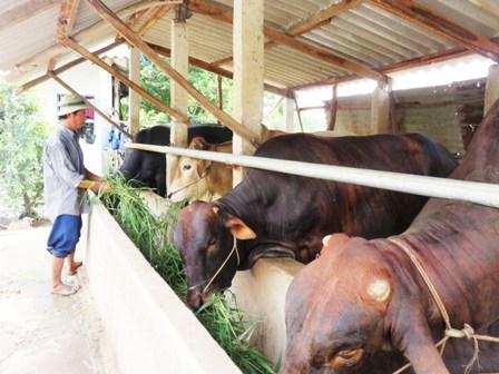 Tình hình chăn nuôi gia súc, gia cầm trên địa bàn tỉnh Tiền Giang  năm 2018