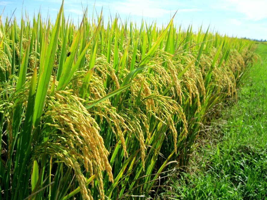 Tiền Giang: Hoàn thành các chỉ tiêu sản xuất Nông nghiệp - Thủy sản năm 2014